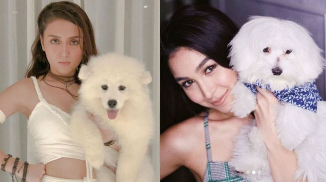 Meet Kathryn Bernardo and Julia Barretto's adorable baby dogs