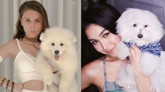 Meet Kathryn Bernardo and Julia Barretto's adorable baby dogs